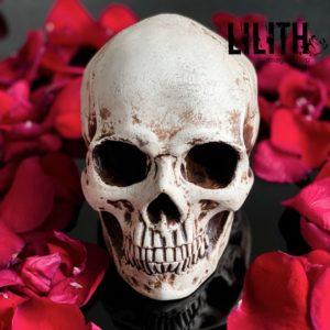 Gypsum Skull – Clear Varnish Finish